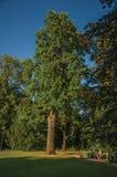 叶茂盛树和孩子有业余时间在公园在日落在蒂尔特 免版税库存照片