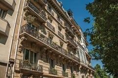 叶茂盛树在晴朗的在巴黎巴黎人样式做的蓝天和大厦下  免版税图库摄影