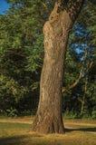 叶茂盛树干和草坪在日落的一个公园在蒂尔特 免版税图库摄影