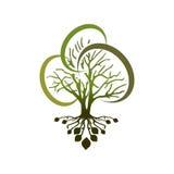 叶茂盛的树 免版税库存图片