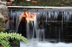 叶茂盛的溪 图库摄影