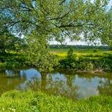 叶茂盛结构树伸出的河 免版税库存照片