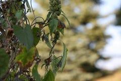 叶茂盛结构树 库存图片