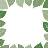 叶茂盛绿色框架 库存图片
