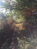 叶茂盛路径 免版税库存图片