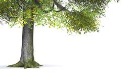 叶茂盛绿色树 免版税库存图片