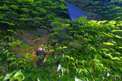 叶茂盛绿色背景 免版税库存图片