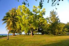 叶茂盛Treeline和豪华的草坪在美丽的绿园 免版税库存图片