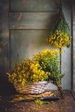 贯叶连翘(金丝桃属植物) 免版税图库摄影