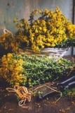 贯叶连翘(金丝桃属植物) 库存照片