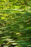绿叶迷离,当快速地驾驶通过森林, Semenic国家公园时 库存图片