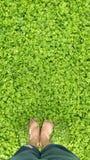绿叶 免版税图库摄影