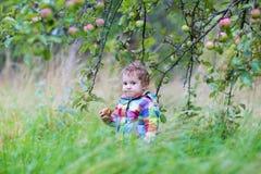 吃一个苹果的滑稽的女婴在秋天庭院里 免版税库存图片
