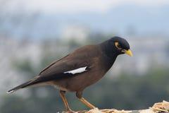 吃一些食物的鸟 图库摄影