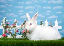 吃一棵红萝卜的白变种兔宝宝在花园里 免版税图库摄影