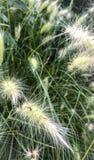吃与地中海日落的太阳的小草蠕虫 免版税库存照片