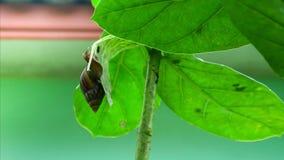 吃叶子的时间间隔蜗牛 股票录像