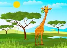 吃叶子的长颈鹿在非洲在日落 免版税库存照片