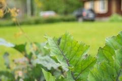 吃圆白菜的叶子的粉蝶蝴蝶的毛虫幼虫 免版税库存图片