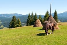 吃在一个绿色牧场地的马草 免版税库存照片