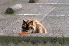 吃在停车场的离群猫 免版税库存图片