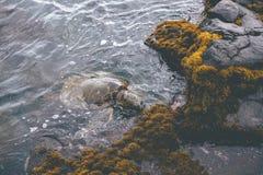 吃在岸附近的海龟在Kona,夏威夷 库存照片