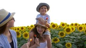 吃在棍子的快乐的孩子甜糖果在美妙的黄色领域的步行期间用在晴朗的光的向日葵 股票录像