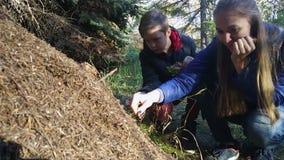 吃在蚁丘的蚂蚁酸在森林里 股票录像
