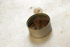 吃在锡罐的逗人喜爱的小的老鼠米 免版税库存图片