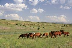 吃在领域的马草 免版税库存照片