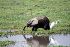 吃大象的婴孩 免版税库存图片