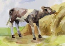 吃干草的小牛 免版税库存图片