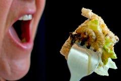 吃幼虫 免版税库存照片