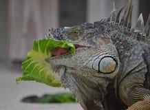 吃您的素食者 图库摄影