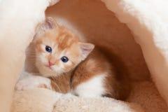 吃惊的小猫 免版税图库摄影