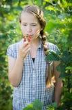 吃成熟野草莓 库存照片