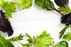 吃新莴苣混合弹簧 新鲜的蔬菜沙拉 蔬菜沙拉框架 库存图片