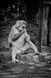 吃照片呼喊这的猴子是变化美好的片刻 库存图片