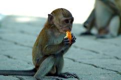 吃猴子年轻人 免版税库存照片