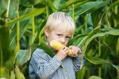 吃玉米棒子的男孩 免版税库存照片