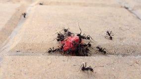 吃甜点的小组黑蚂蚁 股票视频