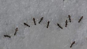 吃甜水的蚂蚁 股票视频