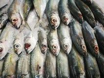 吃的鱼 库存图片
