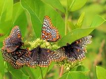 吃的蝴蝶午餐 免版税库存图片