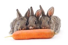 吃红萝卜的幼小兔子 免版税图库摄影