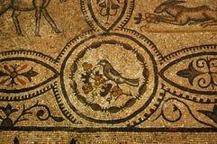 吃罗马结构树的古老浆果鸟 免版税图库摄影