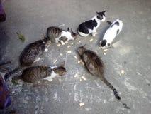 吃芯片的六只猫 免版税库存照片