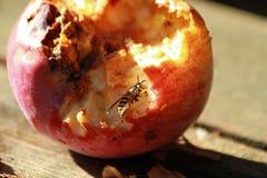 吃苹果的救生服 库存图片