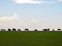 吃草剪影的牛 免版税库存照片