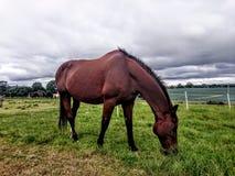吃草反对多云天空的马 免版税库存照片